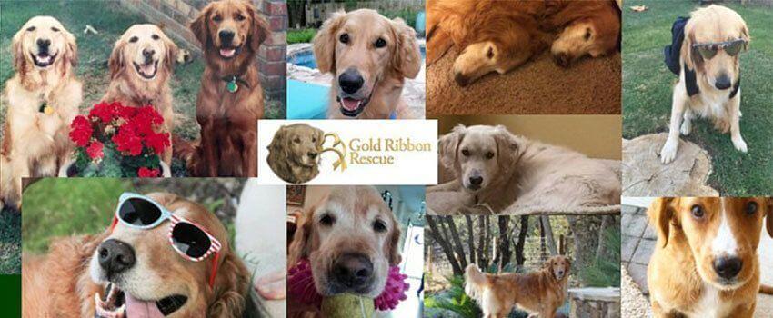 Gold Ribbon Rescue